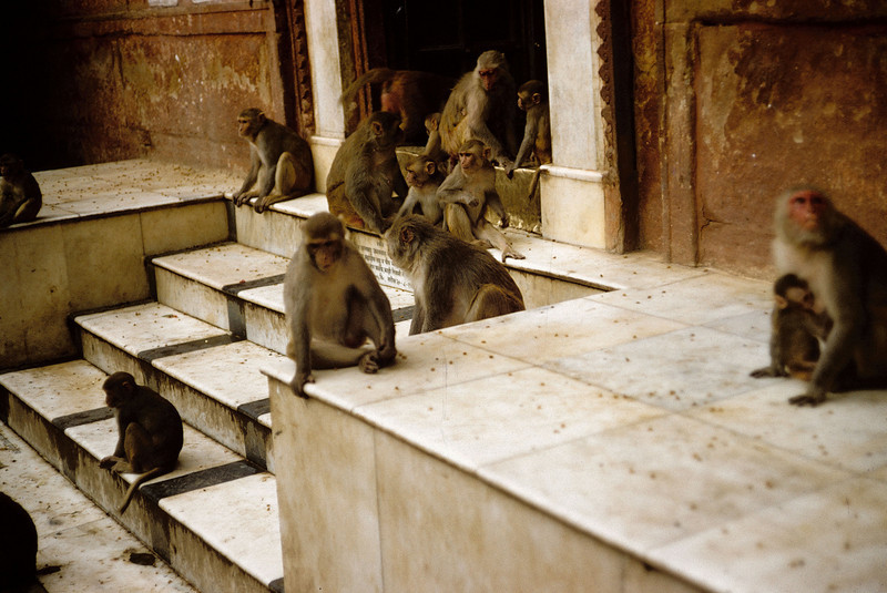Monkey Temple - Calcutta