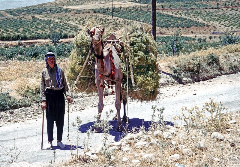 Camel load - Lebanon