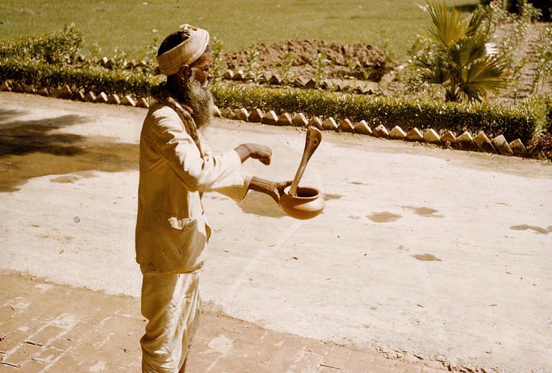 Snake charming act