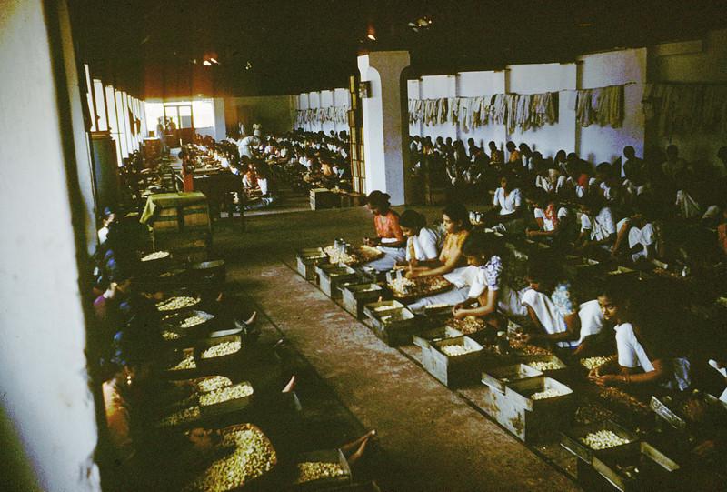 Cashew factory