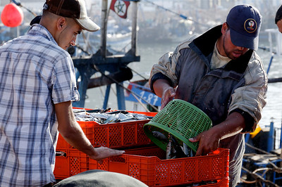 Agadir harbour: fisher men