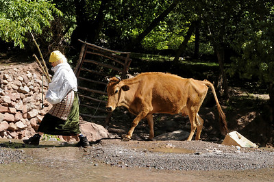 Imi Ourhlad, old woman with her cow