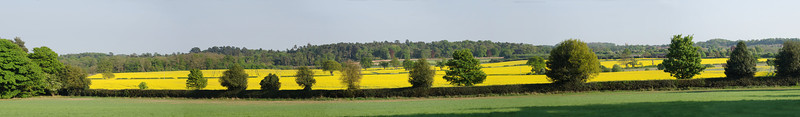 English Field Panorama