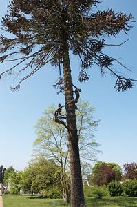 Tree sculpture, Woburn Abbey