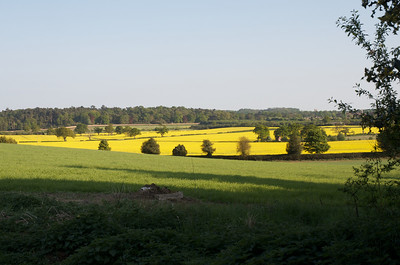 English fields