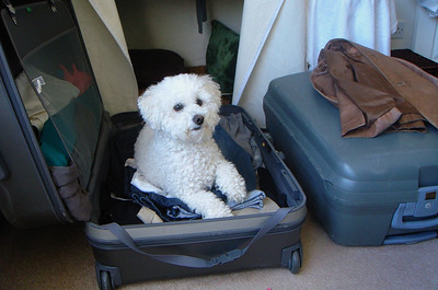 Poppie ready to travel through France