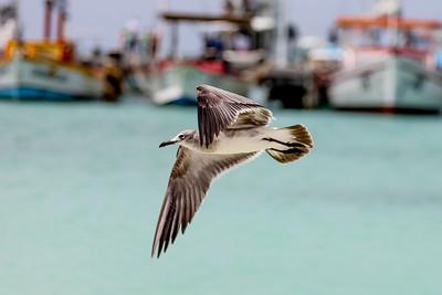 Aruba-9867