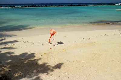 Aruba - March, 2014 (SA5-94)