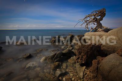 A long, moonlit, exposure of an old Divi Divi tree.  Aruba.
