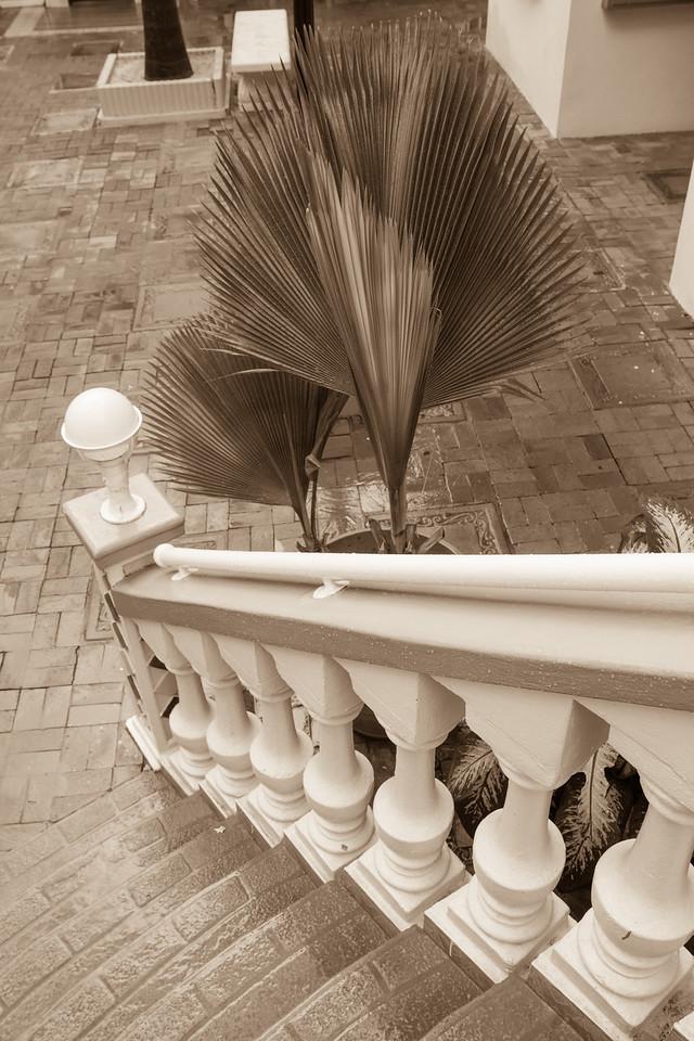 Fan Palms, Oranjestad, Aruba