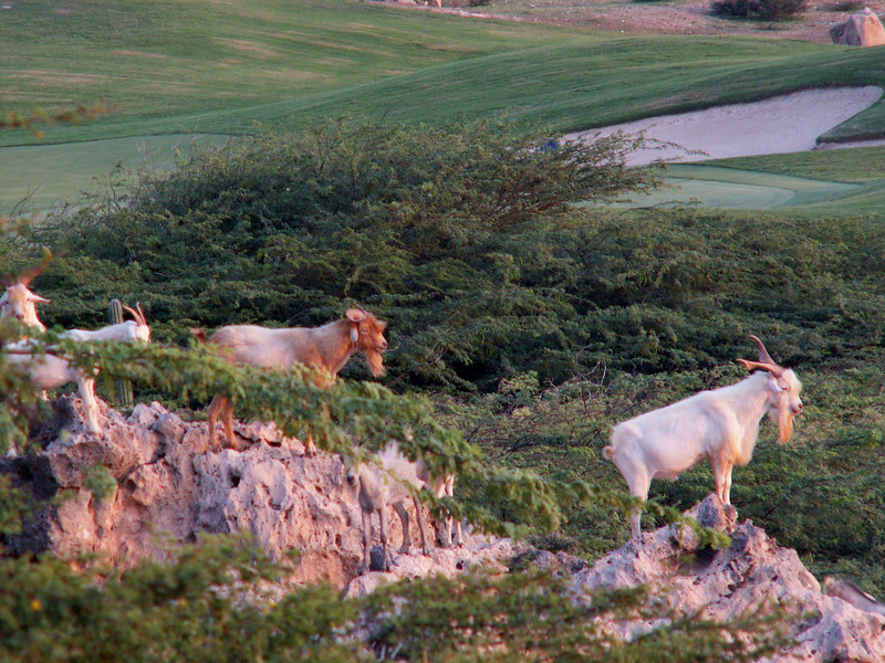 Aruba