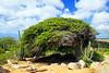Arikok National Park. Cunucu Arikok