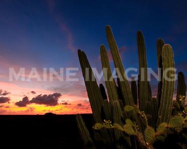 Cactus Sunset.  Aruba.