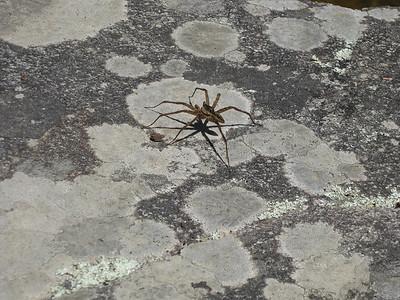 Spider near Linville Falls