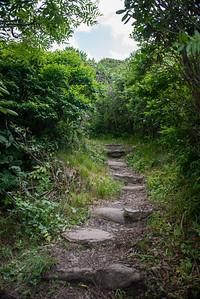 Craggy Gardens Pinnacle Trail, Asheville NC