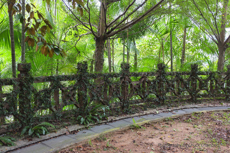 Singapore Fort Canning rail and vines