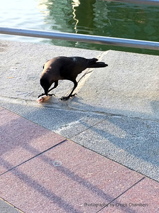 Singapore, a bird's breakfast