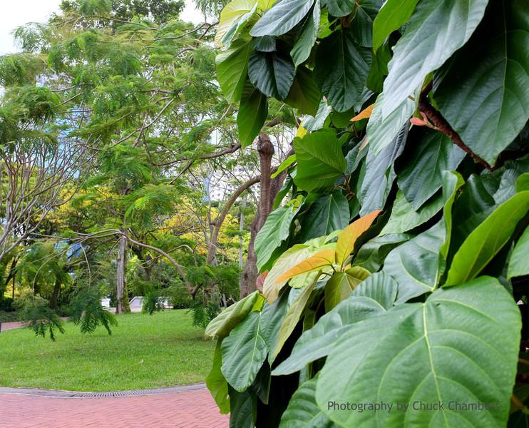 Singapore foliage