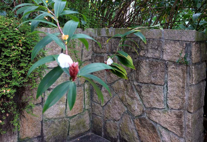 Singapore flower