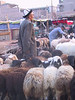 An older shepherd. Here, the hat identifies the ethnic group, I especially liked this one.