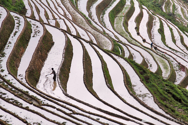 Working in the rice terraces