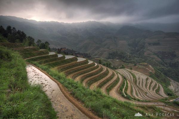 Tian Tou rice fields