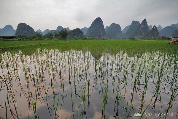 Rice paddies along Yulong River