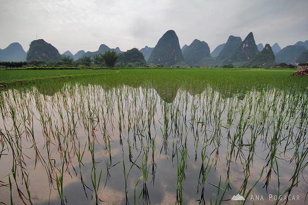 Rice paddies along Yulong River