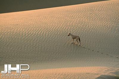 """Long Lost"", Thar Desert, Rajasthan, India, 2007 Print IND3926-266"