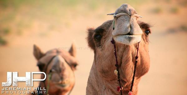 """Faces"", Thar Desert, Rajasthan, India, 2007 Print IND3-926-2382"