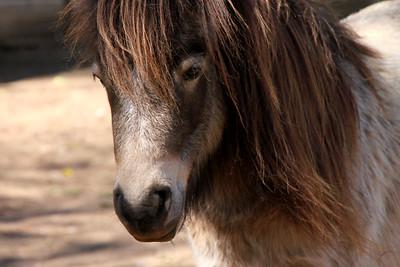 Pretty Pony Lone Pine Sanctuary, Brisbane By: Kimberly Marshall
