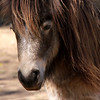 Pretty Pony<br /> Lone Pine Sanctuary, Brisbane<br /> By: Kimberly Marshall