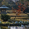 Peace in Japan<br /> By: Kimberly Marshall<br /> Kyoto