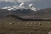 羊群加上雪山...梦境