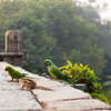 Parakeets were everywhere- especially at Lodhi Garden.