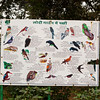 Sad to say that I only saw a few of the birds on this board. I really wanted to see the hornbill and the owl.