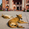 Even Agra has dogs.