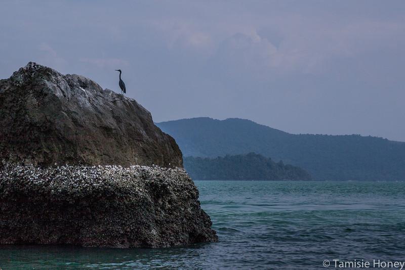 Cormorant on alert