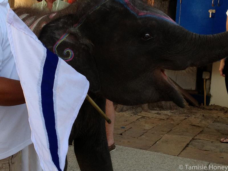 CCA final party elephant