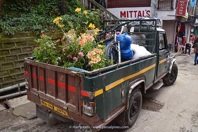 West Bengal,  Darjeeling, 2120m