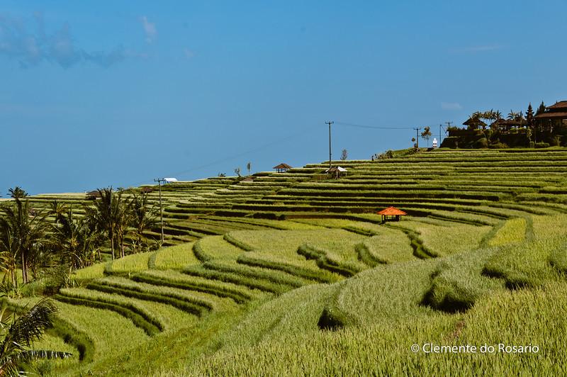 Rice Terraces in Jatiluwih,near Pacung, Bali, Indonesia