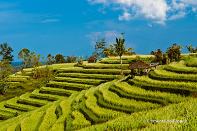 Rice Terraces in Jatiluwih,near Pacung, Bali, Indonesia