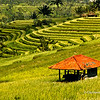 Rice Terraces in Jatiluwih,Bali,Indonesia