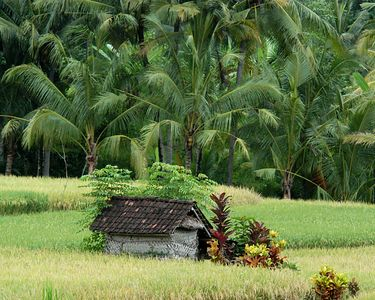 These small huts are used by the farmers for rest and shade