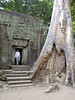 temple_tree_01