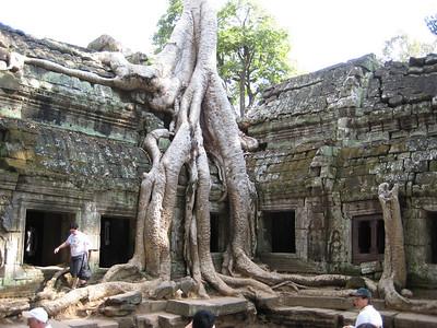 temple_tree_03