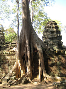 temple_tree_09