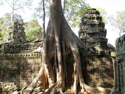 temple_tree_08