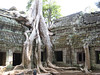 temple_tree_05