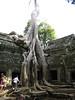 temple_tree_02